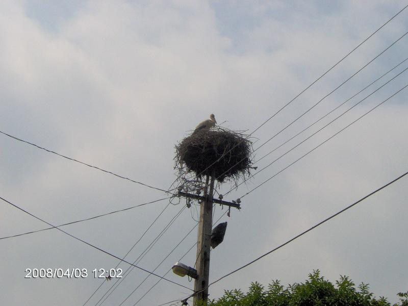 Szalonna gólya